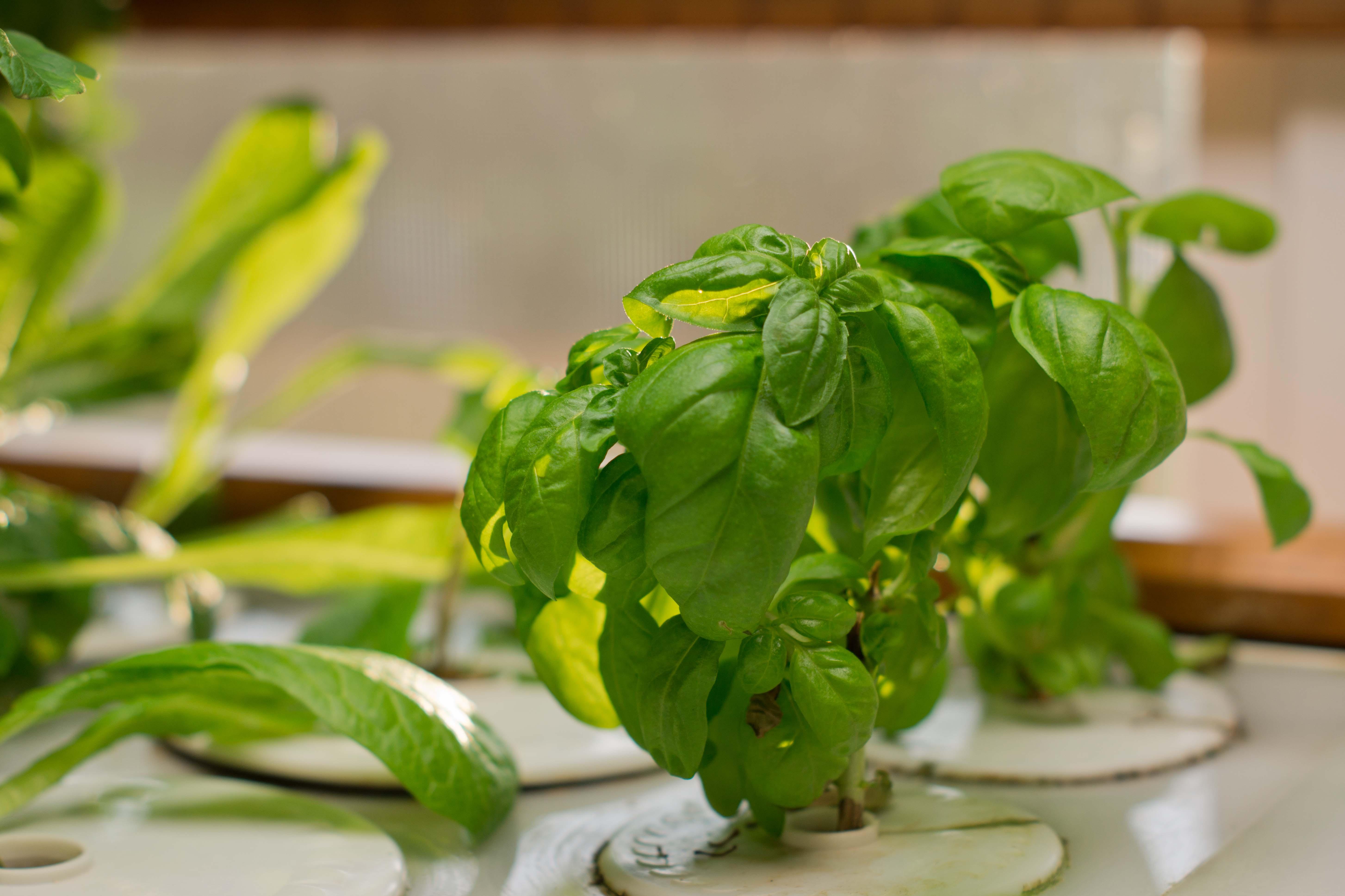 Hydroponics Herb Garden Kitchen My Hydroponic Garden Sassy Susan Creates