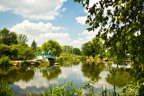 Cox Pond1