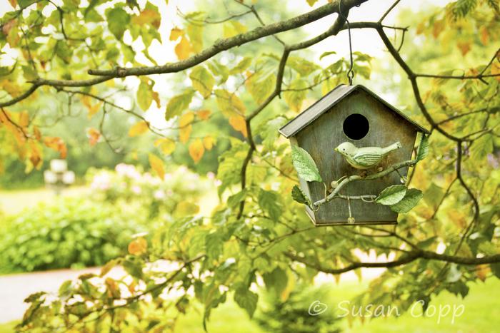 Birdhouse1edt