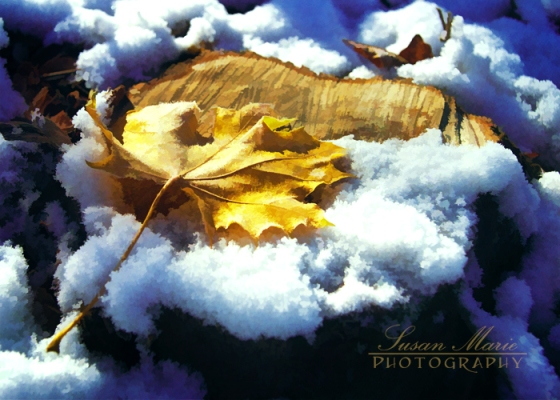 Snowy Autumn Leaf