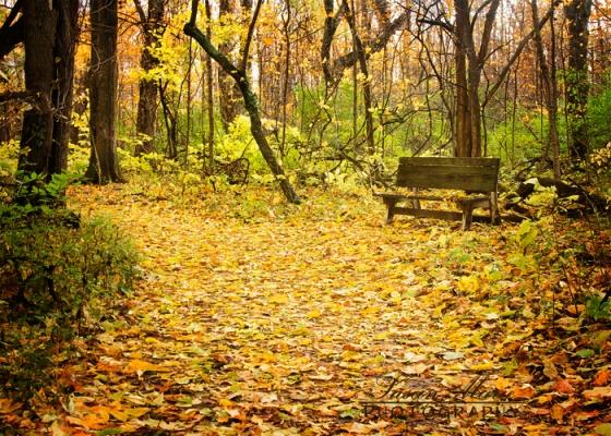 Autumn Respite