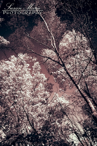 Infrared Treetops