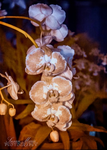 Infrared Orchids