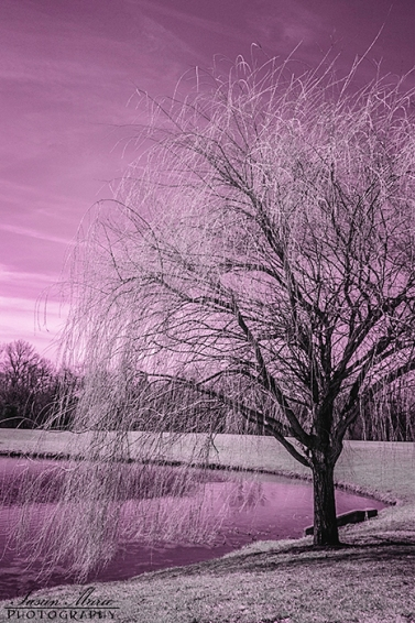 Infrared Willow