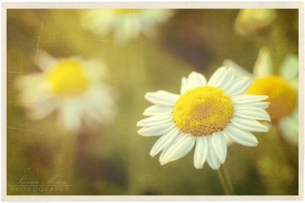 July 2 Garden_20140702_024