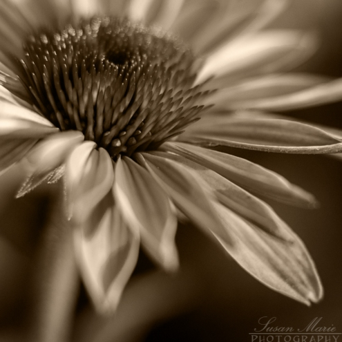 Garden_20140625_016